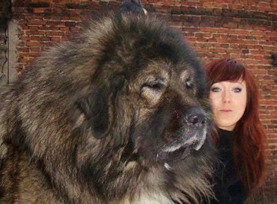 Massive Dog!!!
